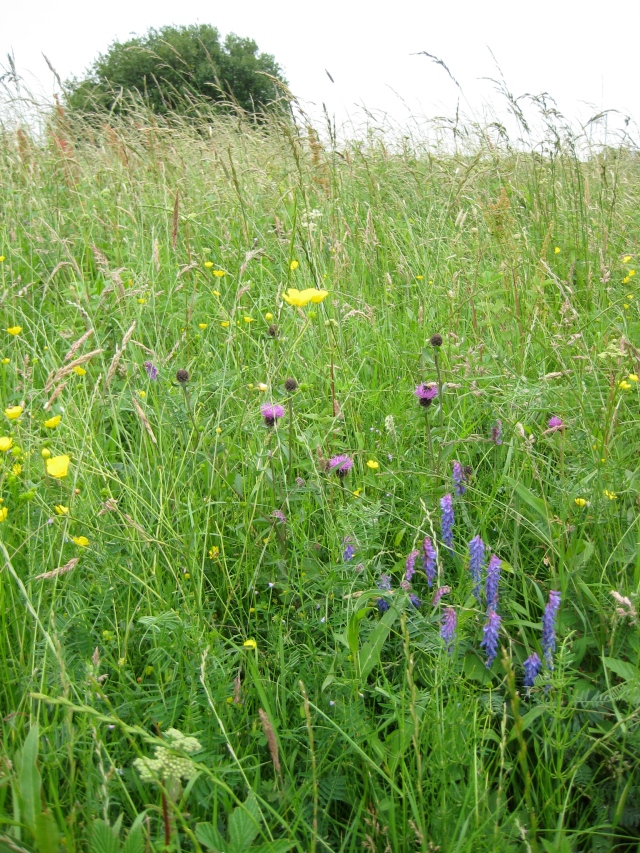 Close-up of unmown area on Walthamstow Marshes